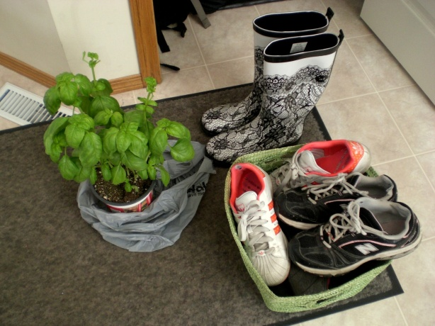 I brought everything here except for the mat and plant. Basil don't like no travelin'.