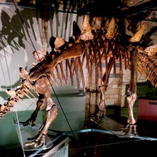 Stegosaurus! Or the tuojiangsaurus - I can't remember which. Still, dinosaurs!