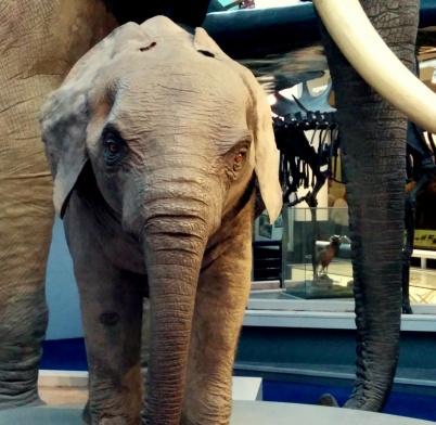 Eheheh. Baby elephant.