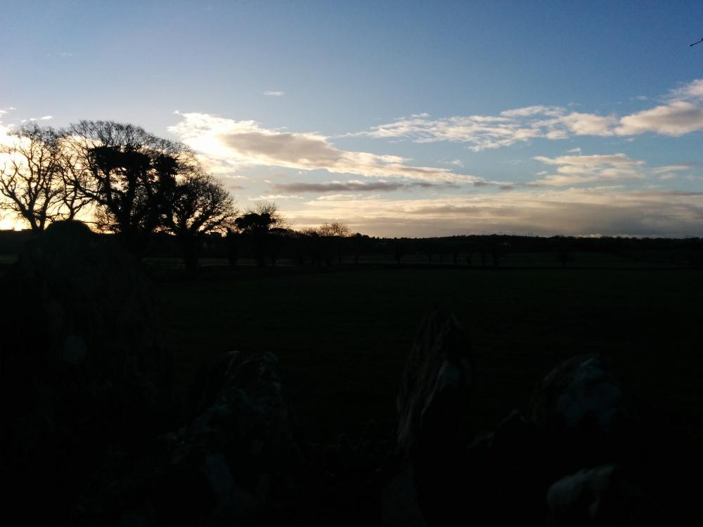 fields by monasterboice